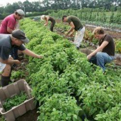 organic-farming-un-report-400x266