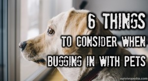 BIG-Pets-Bug-In1